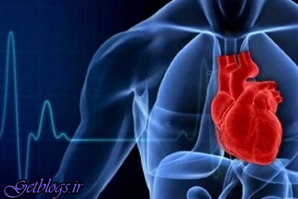 شناسایی آنتی اکسیدان طبیعی که سلامت قلب را اصلاح می بخشد