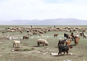 ورود دام عشایر به مناطق ییلاقی فارس بعد از 23 اردیبهشت مجاز است